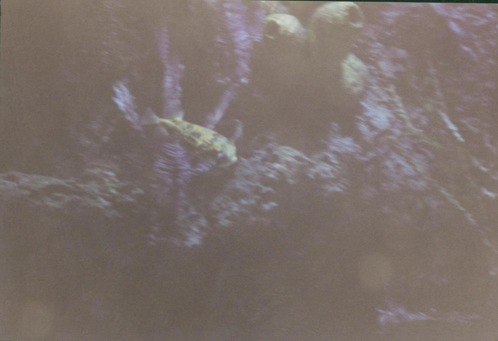 aquarium003.jpg
